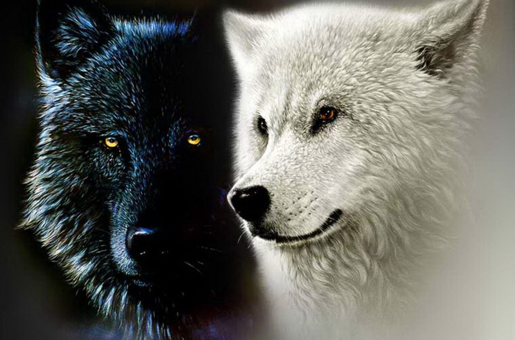 Webinar: The Wolf of Hope and Despair – Exploring the Power of Feeding Hope